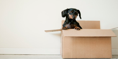 Packing to move house? Where do you start?