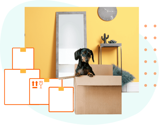 Scene showing boxes and a dog poking it's head out of a box